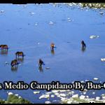 Noleggio Bus Medio Campidano